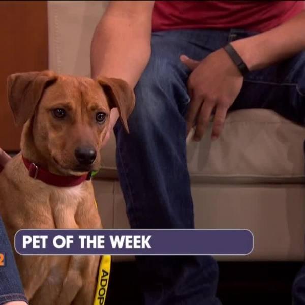 2-25-15 Pet of the Week Austin Dog Rescue_99922