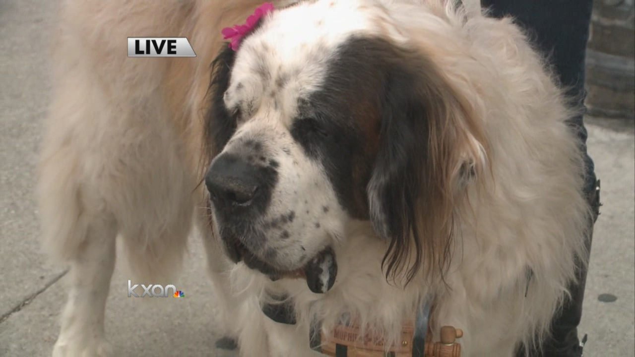 Phone Battery Low Sxsw Saint Bernards Want To Help Mophie's dock charges a little quicker than the competition, and no other charging station offers such a great combination of features at a comparable price. kxan austin