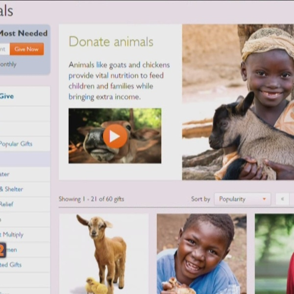 5-8-15 World Vision Kerry Bendt Live baby animals_120019