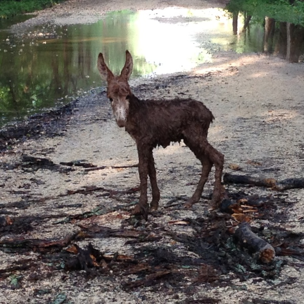 Baby donkey found in Elgin_122572
