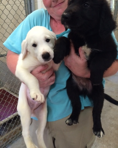 2 healthy pups at the Bastrop Shelter_151797