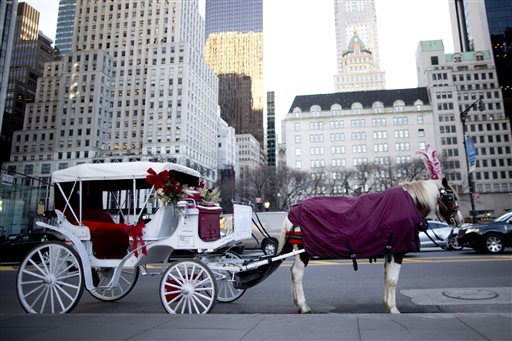 NYC Horse Carriages_231607