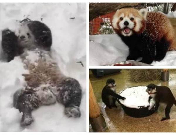 Animals Know how to enjoy #blizzard2016_234475
