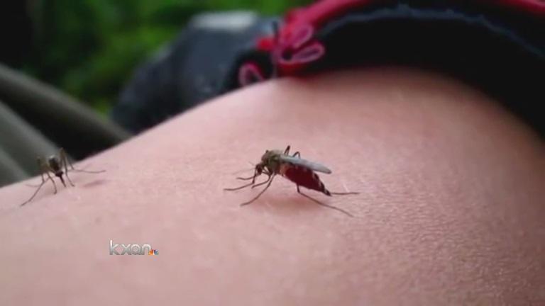 Mosquito_131633