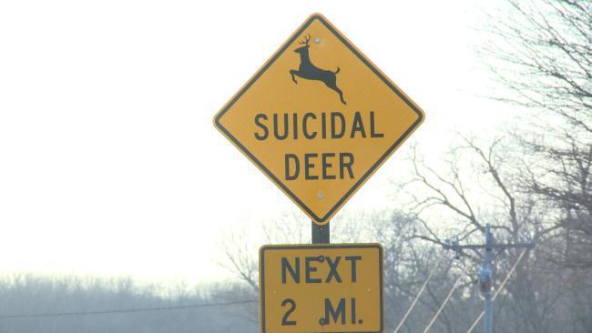 suicidal-deer_257373