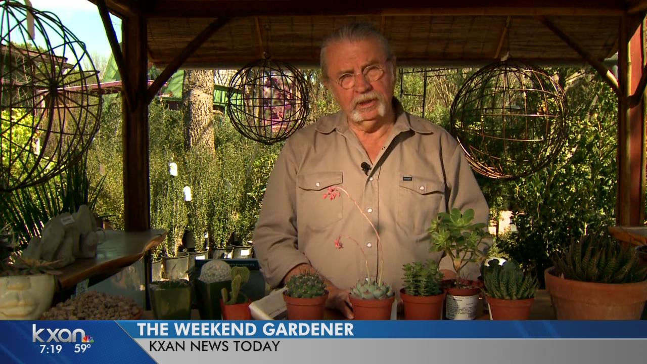 weekend gardener_253960