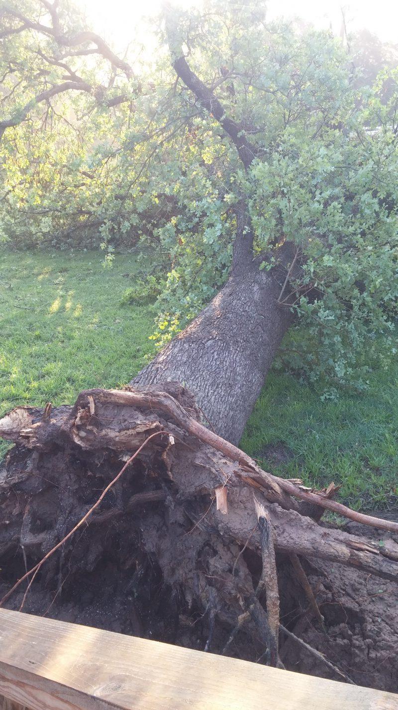 Bastrop Tree Down_278850