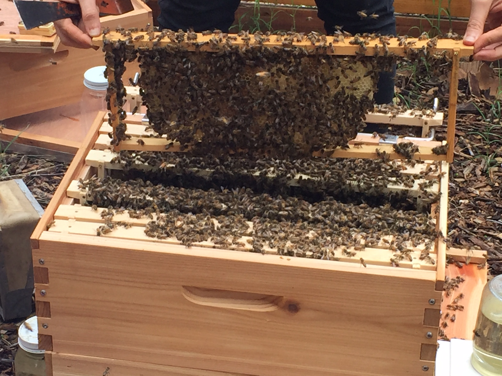 New bee apiary at the Sustainable Food Center. (KXAN Photo)