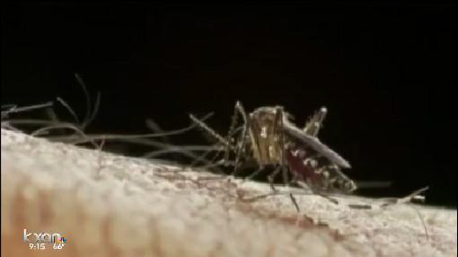 Zika_266454