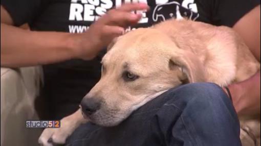 05-26-16 Austin Dog Rescue_290981