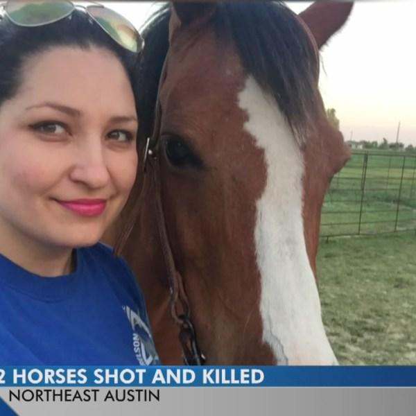 Horses shot and killed on NE Austin property