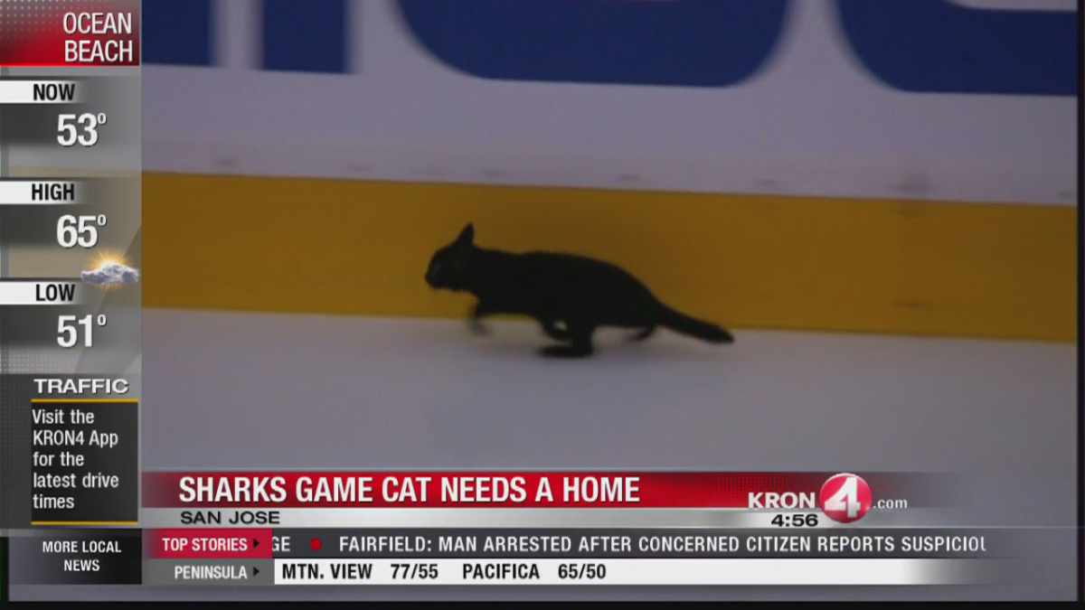 cat hits the ice_279446
