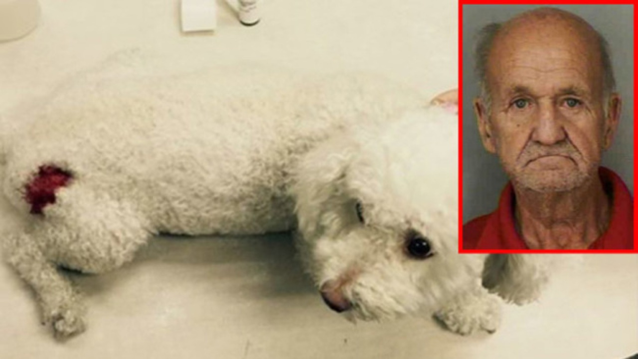 Cops: Naked man let his 5 dogs attack neighbors poodle