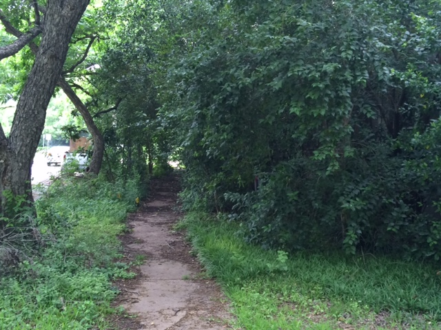 Shrubs cover Austin sidewalks_284352