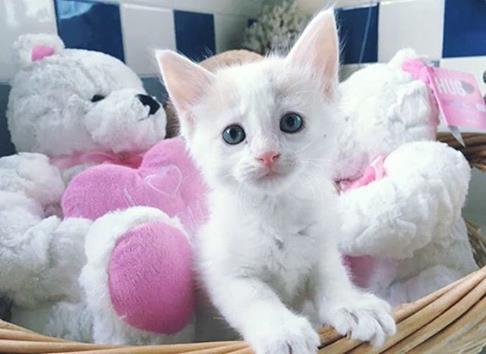 Kitten at the Austin Animal Center_304960