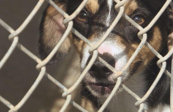 Bastrop County animal shelter_299935