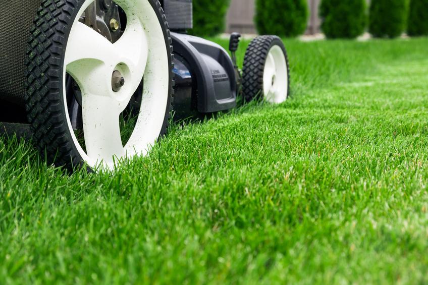 Lawn mower_300954