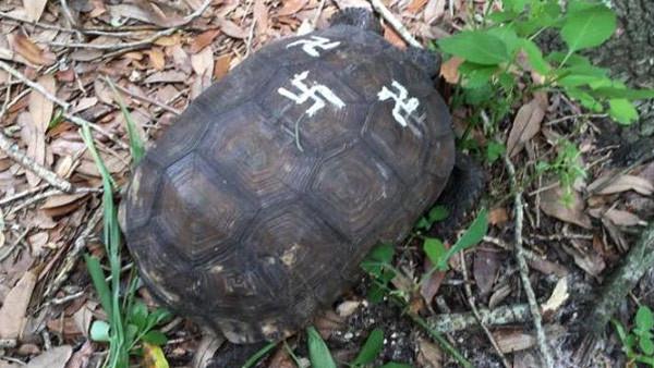 swastika-turtle_311200