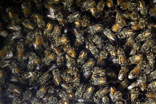 Bees Pesticides_270536