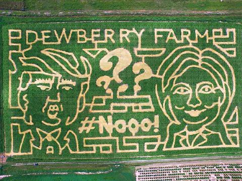 Dewberry Farm Trump_Clinton corn maze (Dewberry Farm Facebook photo)_346871
