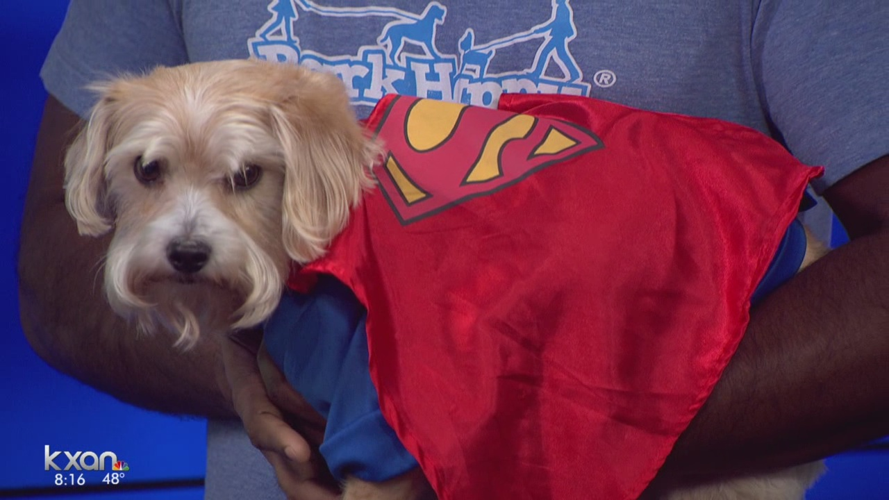 Kerby Samuel, Chief-Puppy-Officer for BarkHappy, at KXAN to discuss Howl-O-Ween charity bar crawl. (KXAN)_365017