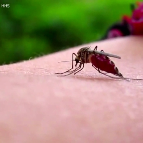Austinites traveling to Rio Grande Valley concerned about Zika