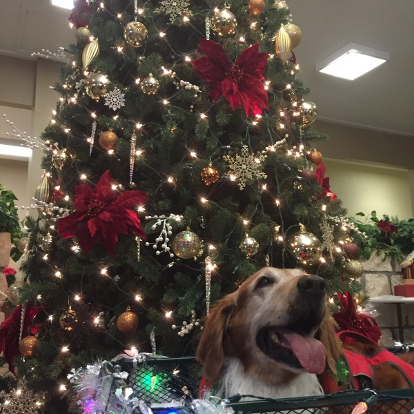 Austin Dog Alliance therapy dog teams visited nine assisted living and nursing homes on Christmas Eve. (KXAN_Kyle Kovilaritch)_391869
