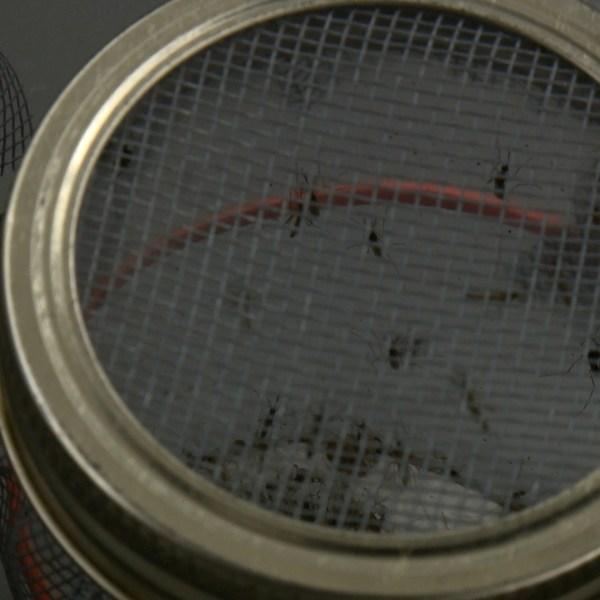 DSHS Zika Mosquito Testing Lab_300852