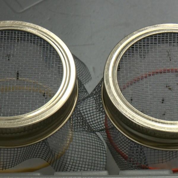 DSHS Zika Mosquito Testing Lab_300850