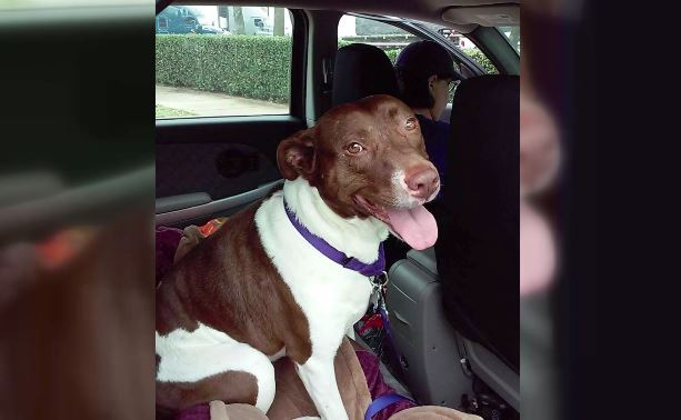 Dog returns home to Texas from Virginia_423619