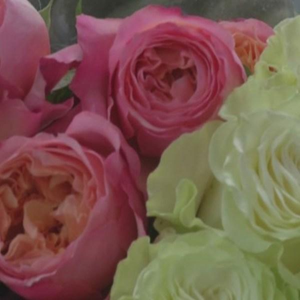 roses_418532