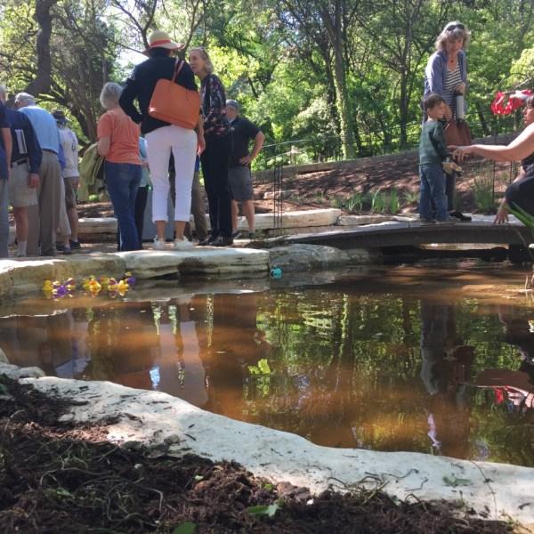 Zilker Botanical Garden_442443