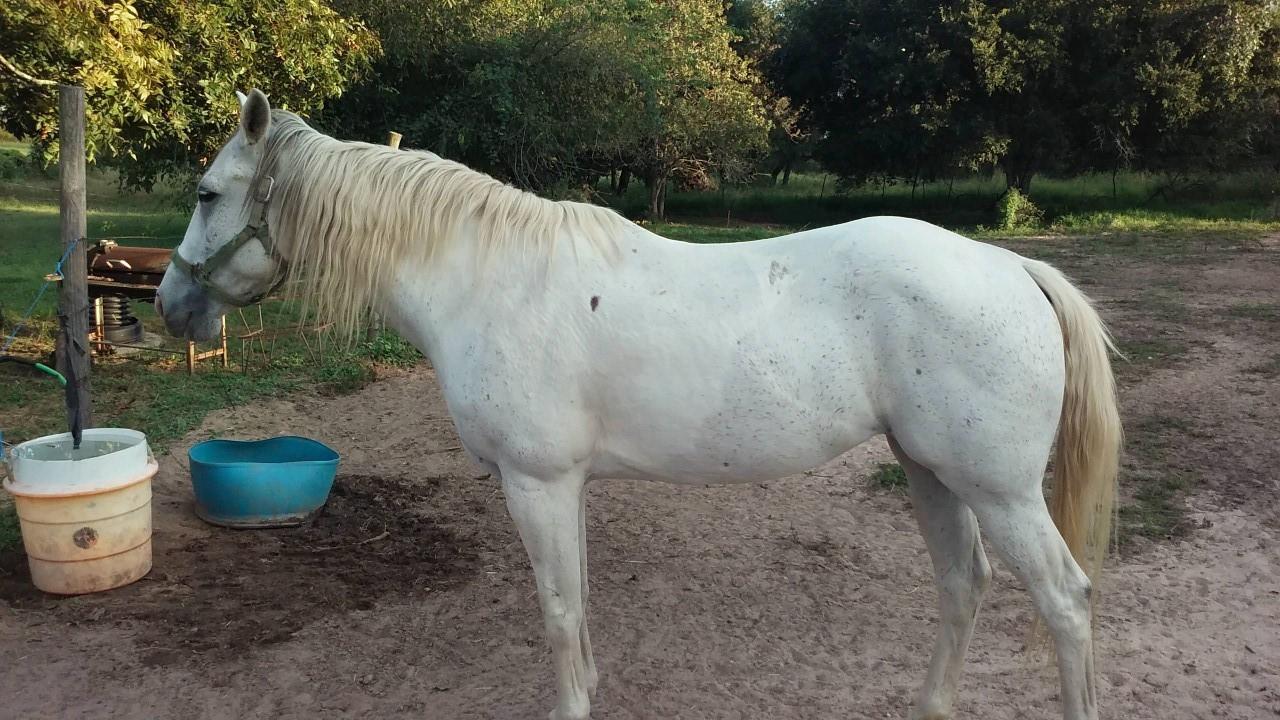 A horse stolen in Mason County_449737