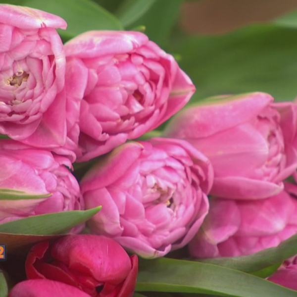 5-4-17 Flowers_465921