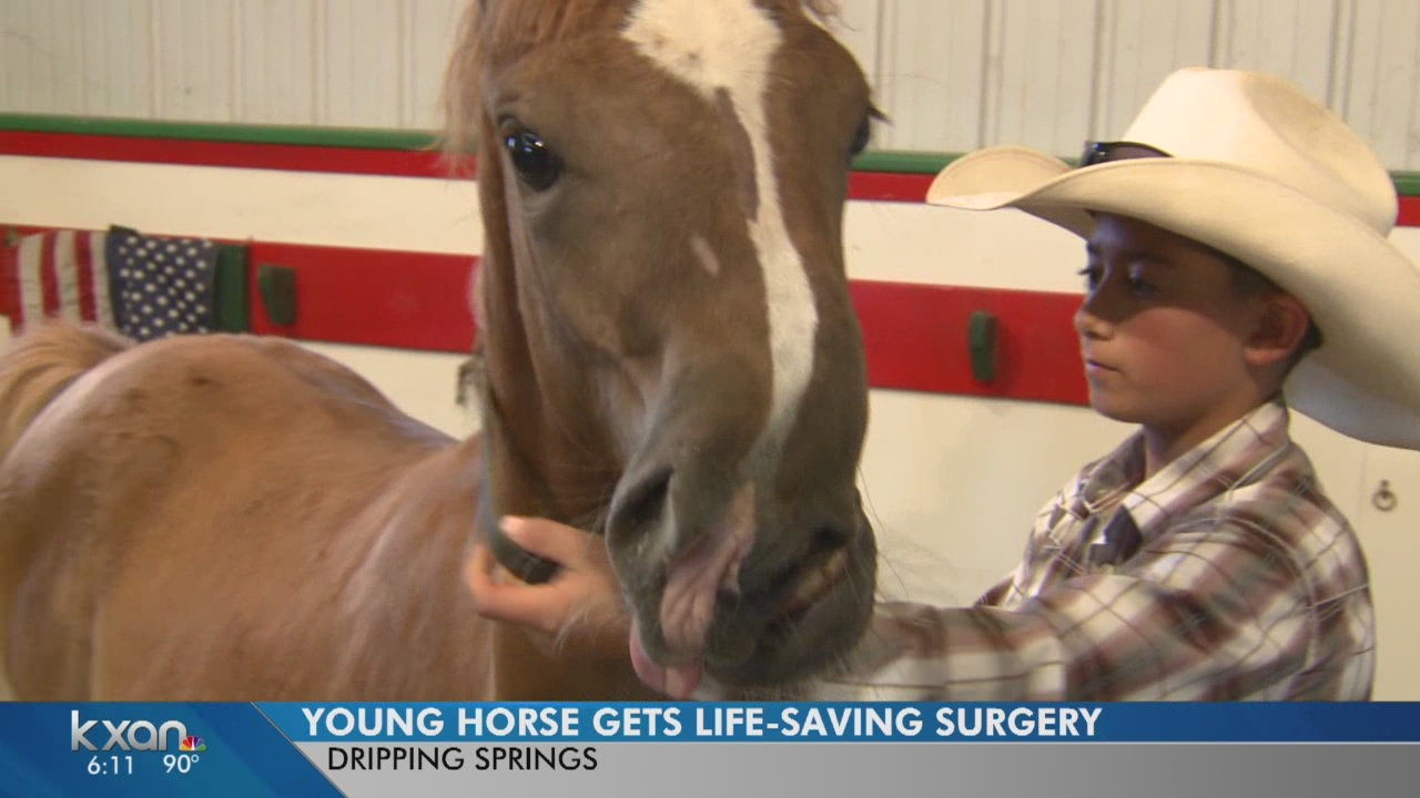 Barbara the Horse readies for trip to Tennessee for needed surgery