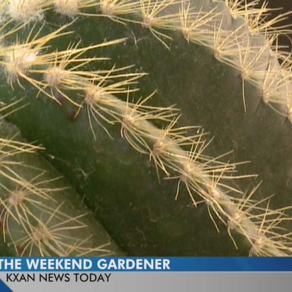 Weekend Gardener: Succulent and cactus gardens