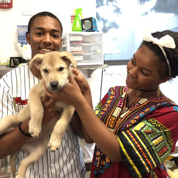 Annabelle the puppy adopted by a new family_497616