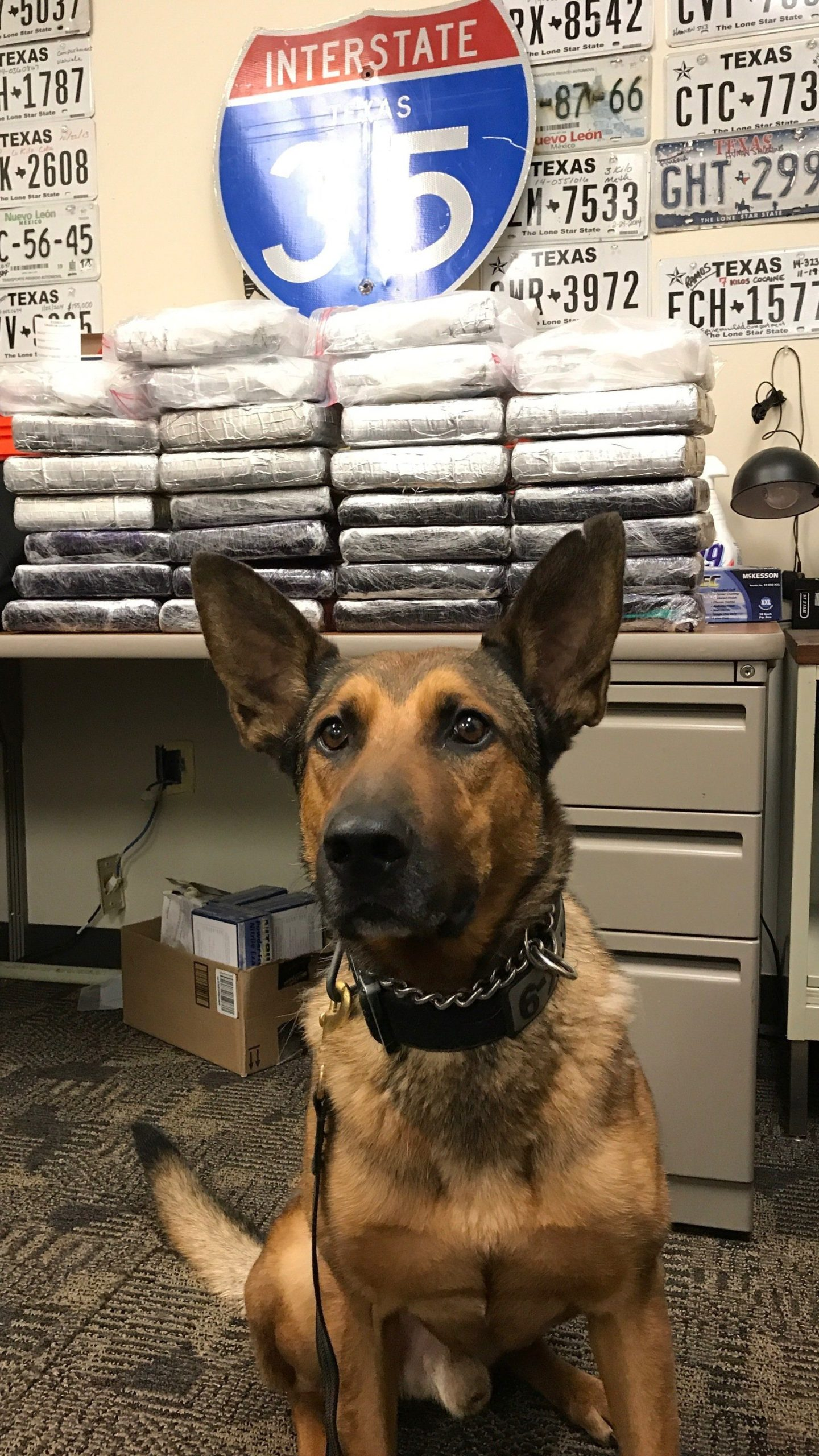 K9 Cuatro posing with the seized drugs. (Austin police photo)_484215