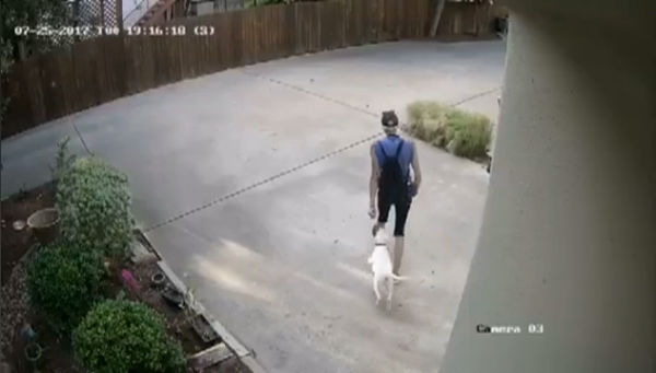 Bluff Street dog stolen_514002