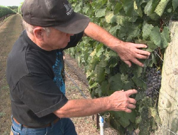 Gary Elliot is the proud owner of Driftwood Estates Winery_509388
