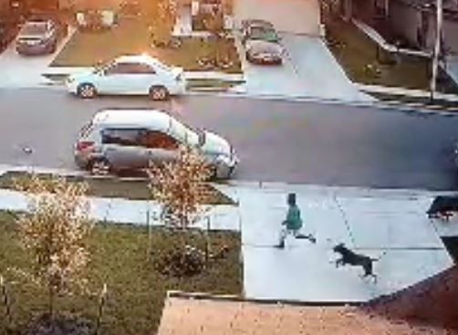 July 3, 2017 attack of boy in Manor by neighborhood dog_508529