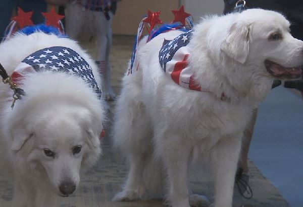 Therapy dogs on parade at St. David's Children's Hospital_500582