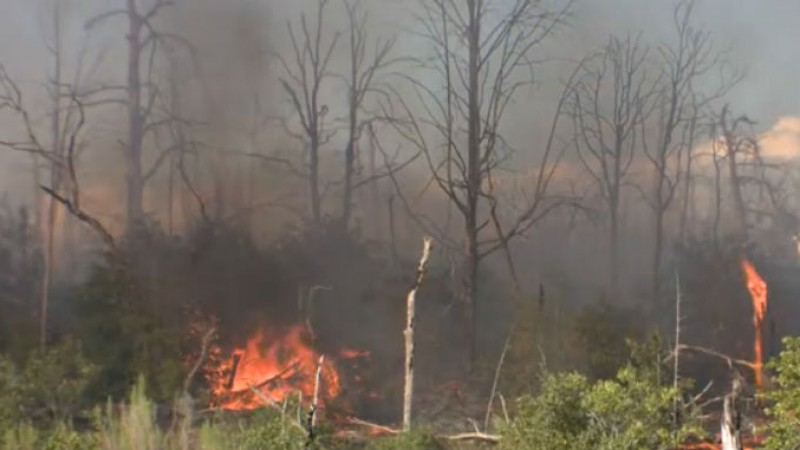 Royal Pines - Bastrop County wildfire_529049