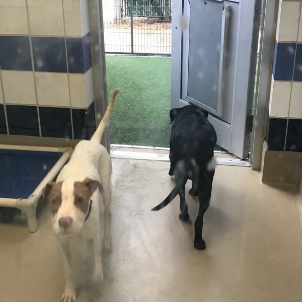 Austin Animal Center pets_521390