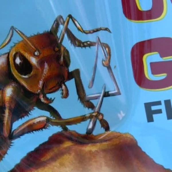 Weekend Gardener_ Getting rid of pesky fire ants_537556