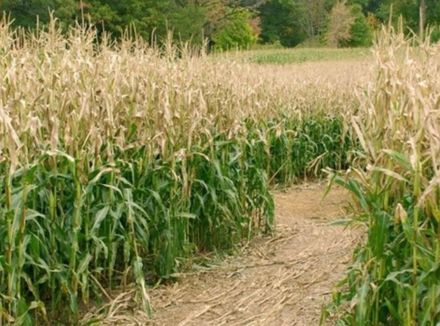 A family in Utah left their 3-year-old child behind overnight in a corn maze._559881