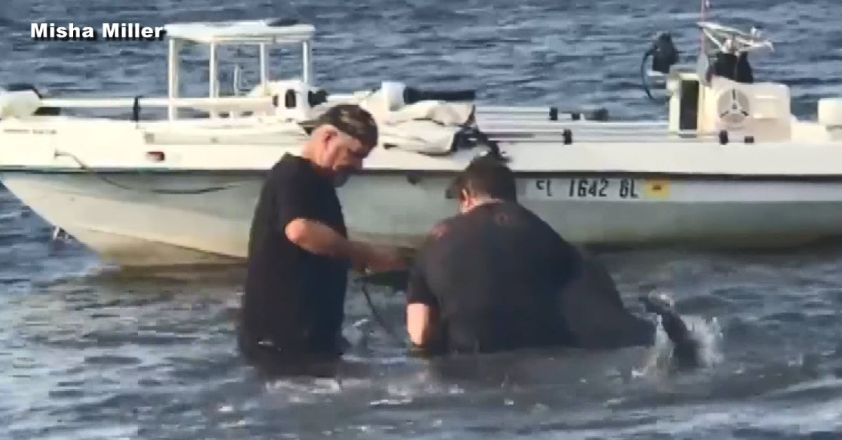 Florida dolphin rescue caught on tape_556661