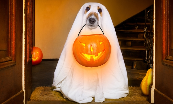 Halloween Ghost Dog Trick Or Treat_570080