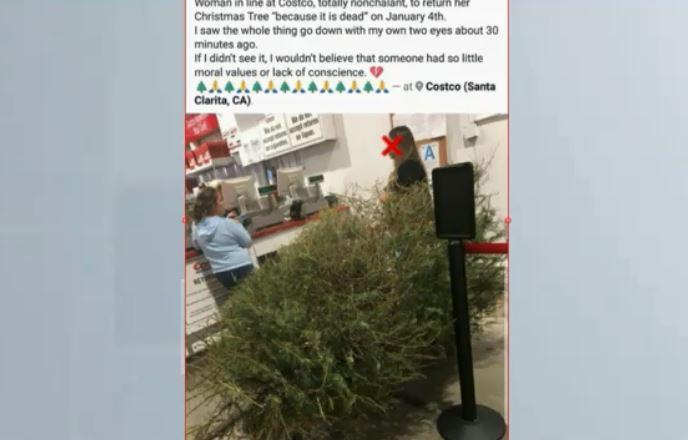 woman returns dead christmas tree_612769