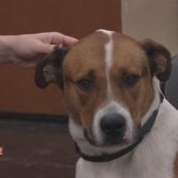 Austin Animal Shelter_632061